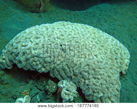 Thriving coral reef alive with marine life and shoals of fish Bali.