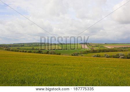Scenic Barley Fields