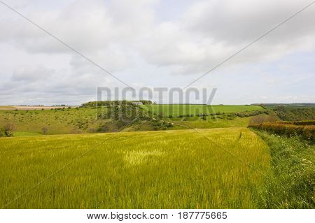 Scenic Hills And Barley