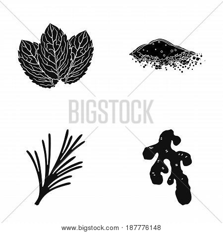 Mint, basil, root of ginger, paprika.Herbs and spices set collection icons in black style vector symbol stock illustration .