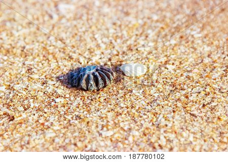 Sea shell sand. Selective focus. Sandy background.