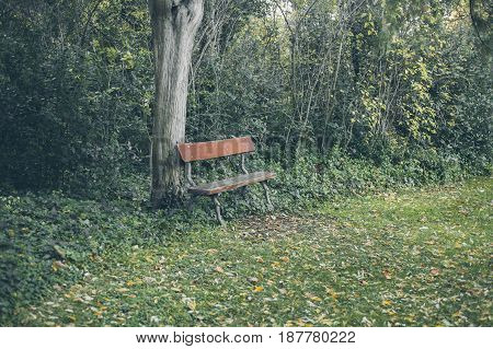 Old wooden bench. Outdoors. A bench in the park. Lonely place in the garden. Bench in a beautiful garden in vintage style. Lonely bench at the park.
