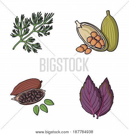 Dill, cocoa beans, basil.Herbs and spices set collection icons in cartoon style vector symbol stock illustration flat.
