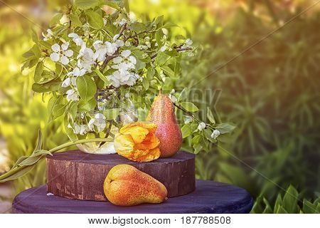 Pear still life with flowers art on the green background in the garden on a Sunny day , tinted