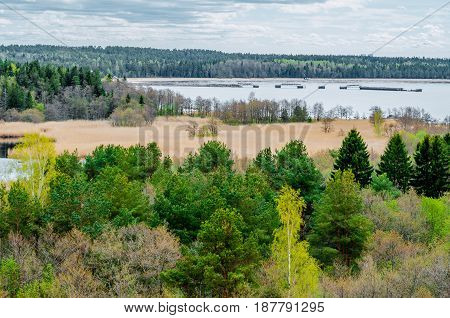 View Of The Pine Forest Of A Lake And Grass On The Coast Of The Bay.