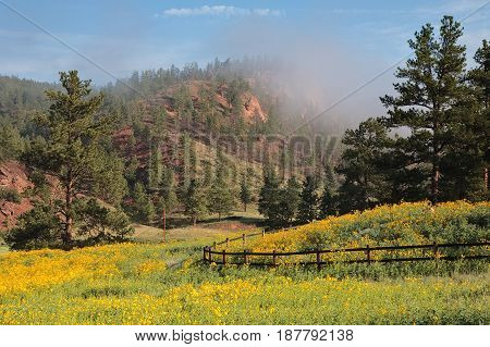 Foggy Sunrise with a field of wildflowers in the Colorado Rocky Mountains.
