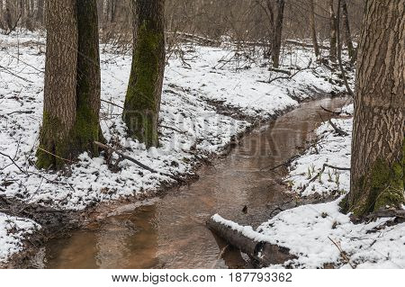 Dirty forest creek in early spring forest