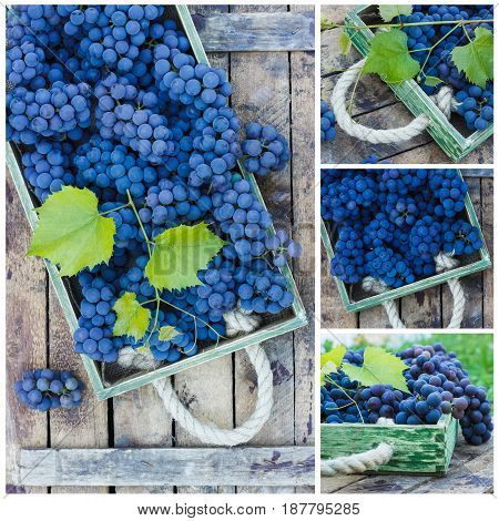 Bunches Of Blue Grape And Green Grapevine On The Wooden Tray, Outdoors