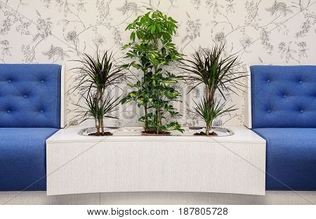 Furniture And Plants