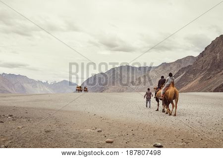 Little Caravan of camels goes to the mountain desert travel