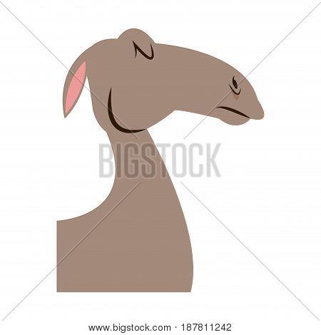 head camel animal manger christmas vector illustration