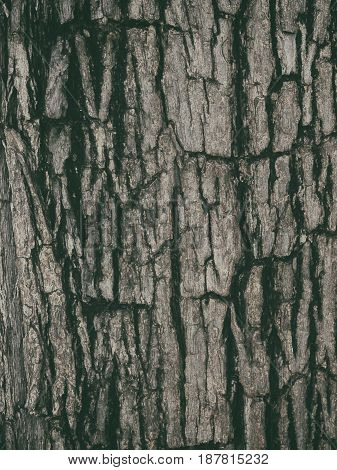 dark wood background wooden brown surface texture. may use to interior design.