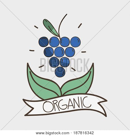 delicious grape with leaves and ribbon design, vector illustration