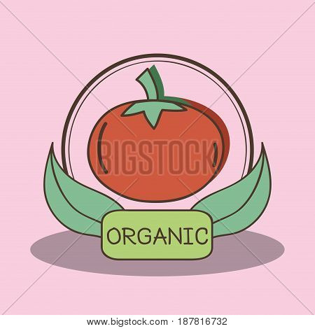 fresh tomato organ fruits with leaves, vector illustration