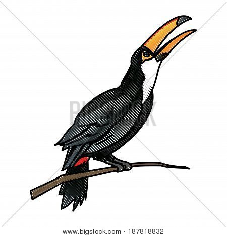 toucan bird on the nature in brazil vector illustration