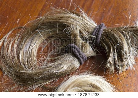 Close up of a thick cut-off ponytail of long blond hair held together with brown hair ties