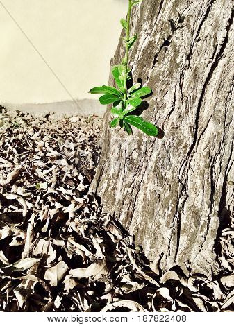 Ecology Concepts with Hope and Rebirth Young Little Sprout with Green Leaves Emerge From Tree Stub.