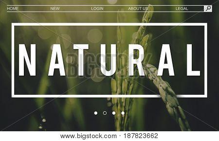 Ecology Fresh Lush Natural Nature