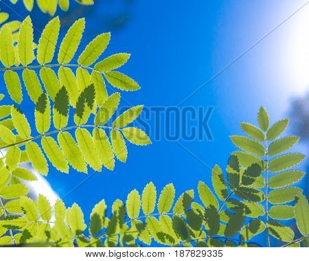 Young fresh green leaves against the sun and sky in the woods on a spring or summer day