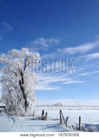 Beautiful winter scene where the sun came out to show off the delicate frost on the trees