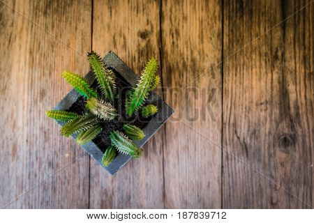 A top view of cactus in a black square pot on wooden table with vignette and vintage tone selective focus.