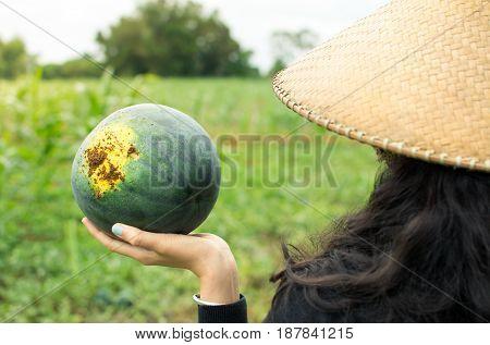Female Farmer Holding Freshly Picked Watermelon