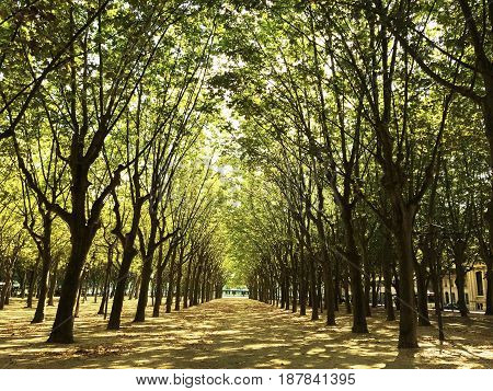 Sunlit alley with beautiful trees. City of Bordeaux France.