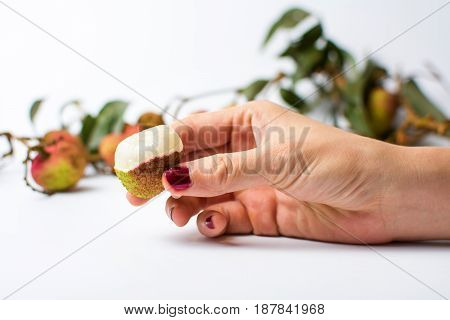 Woman Hand Holding Lychee Fruit On White