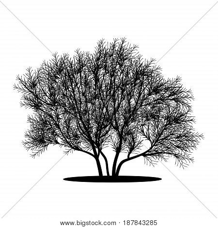 silhouette bush with leaves and shadow on white background