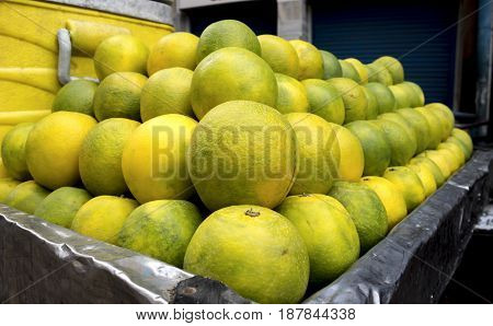 The sweet lime, Citrus limettioides Tan. (syn. C. lumia Risso et Poit). 'Indian' ('Palestine')-oblong, ovoid or nearly round, with rounded base and small nipple at apex, occasionally slightly ribbed; peel aromatic, greenish to orange-yellow when ripe, smo