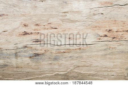 background texture surface splat  old wooden of tree