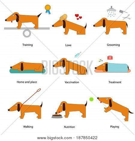 Cartoon Caring for Dog Set Love and Play Domestic Animal Treatment Flat Style Design. Vector illustration