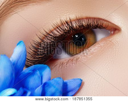 Beautiful Macro Shot Of Female Eye With Classic Clean Makeup. Perfect Shape Of Eyebrows And Extreme