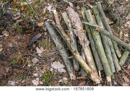 Pile of firewood . Preparation for fireplace at forest camping