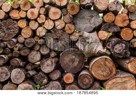 A woodpile of round logs and wood chucks in the countryside.