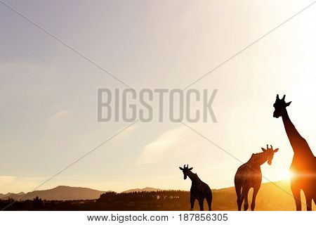 Natural Safari landscape in lights of sunset . Mixed media