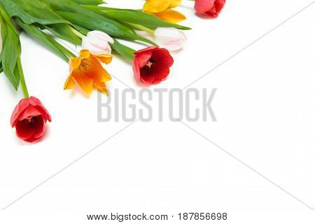 Close-up View Of Beautiful Tender Tulips With Green Leaves Isolated On White Background