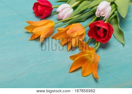 Close-up View Of Beautiful Tender Tulips With Green Leaves On Blue Wooden Table Top