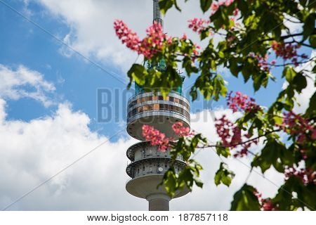 Olympics between flowering trees, stadion, television, tower