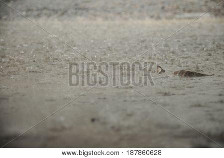 Thunderstorm And Raining Drop On Ground