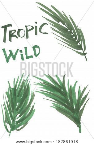 Hand drawn marker tropical leaves. Illustration isolated on white background. Jungle design elements