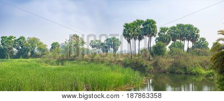 Landscape Scene of wetlandmarshstream or river bed with green Grasses Grown and some big trees like palm tree etc.details of Mother Earth - Nature.