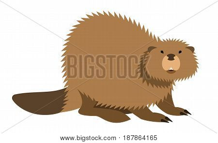 Cute beaver with long tail vector cartoon illustration. Wild zoo animal icon. Big brown furry adult looking straight. Isolated on white. Forest fauna childish character. Simple flat design element