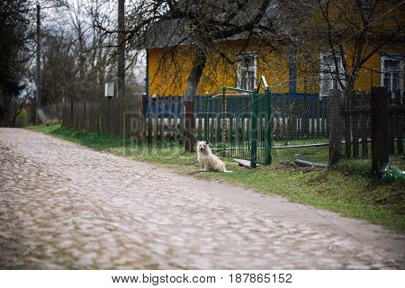 Lonely dog sitting outdoor near the house. Cute little cur on nature background. Friendship. loneliness and devotion