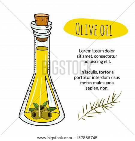Colorful hand drawn olive oil bottle with sample text. Isolated cute flask with healthy cooking oil and olives. Sketchy cartoon illustration for restaurant, organic shop banner, flyer, coupon.