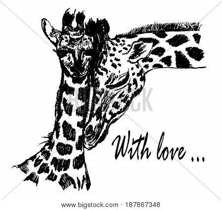 Drawing of mother and baby giraffes, tenderness and care, sketch, hand-drawn graphic ink vector illustration