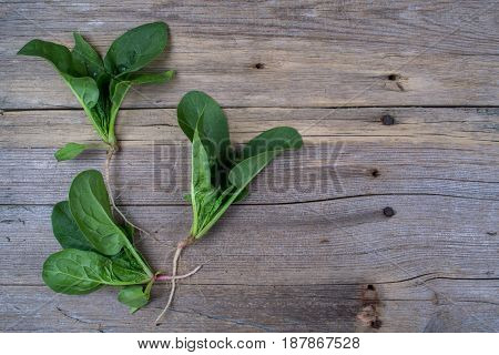Bunch of fresh spinach with roots on rustic wooden background. Eco products