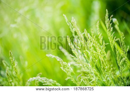 Green grass abstract background grass with sun glare spring colors