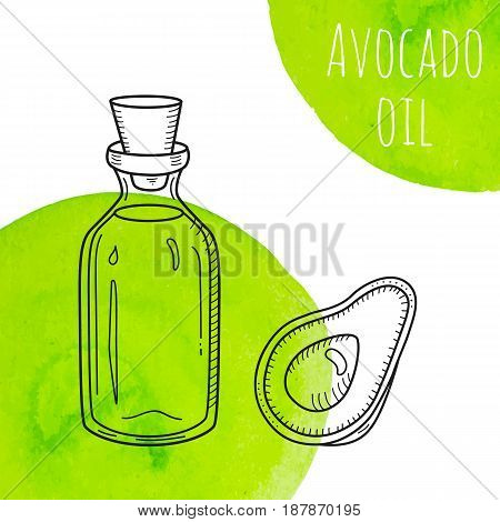Hand drawn avocado oil bottle with green watercolor spots. Isolated cute vial with healthy cooking oil and avocado. Sketchy doodle illustration for aroma therapy, cosmetic, restaurant, organic shop.