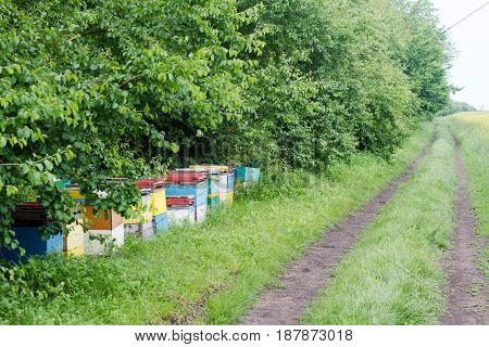 perspective view row of colored beehives by the edge of a green forest and a rural road